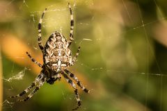 Big spider and spiderweb. In the park royalty free stock images