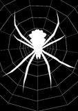 Big spider with spiderweb. Illustration in black and white of a big spider royalty free illustration