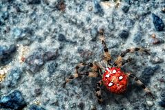 Big spider on a stone. Royalty Free Stock Photos