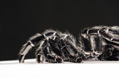 Big Spider Stock Photography