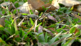 Big spider walking on the grass stock footage