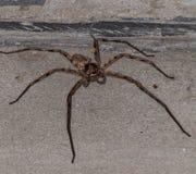 Big spider Stock Photos