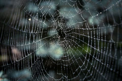 Big spider web covered with drops Royalty Free Stock Images