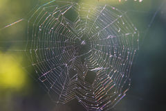 Big spider web covered with drops Stock Images