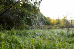 Big Spider Web with Dew Drops Stock Images
