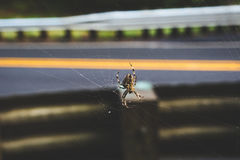 Big spider on a web near a road. A large orb weaver spider in its web near a road in the countryside stock image