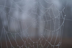 Big spider web in rain drops Royalty Free Stock Images