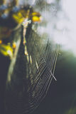 Big spider web on a tree Royalty Free Stock Photography