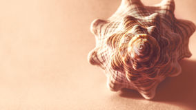 Big spiral seashell. Royalty Free Stock Photo