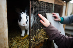 Big spotty rabbit in a cage. Stock Images