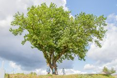 Big spreading oak on the hill. Past him is a family with children royalty free stock photography