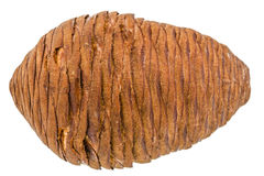 Big of spruce pinecone isolated on a white background Royalty Free Stock Image