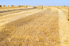 Big square bales. stock image