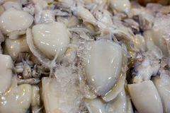 Big Squid The ice in the Market. Big Squid The ice Waiting to be cooked Royalty Free Stock Photos