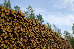 Big stack. Of timber with trees and sky Royalty Free Stock Photo