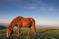 Big stallion under the moon Royalty Free Stock Image