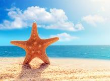 Big starfish on the beach Stock Photos