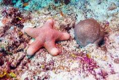 Big starfish on the ocean floor, Maldives Royalty Free Stock Photography