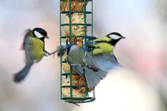 Big starvation at bird feeder Royalty Free Stock Photo