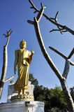 Big Statue Buddha Stand Outdoor Branch Stock Photography