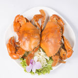 Big steam crab Royalty Free Stock Photos