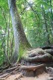 Big stem of tree Stock Photos