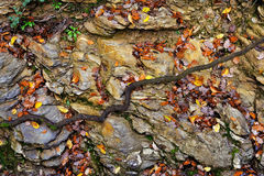 Big stone with autumn leaves in forest Stock Photos