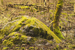 Big stone covered by moss Stock Images