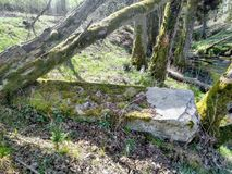 A big stone in forest stock photo