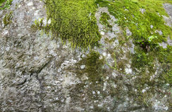 Big stone with moss Royalty Free Stock Images