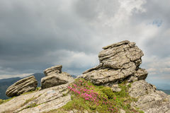 Big stone in mountain landscape with blooming pink rhododendron Stock Images