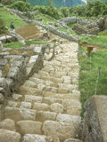 Big Stone Stair in Machu Picchu City Stock Image