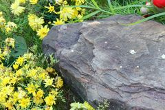 Big stone and yellow flowers in the grass Royalty Free Stock Photo
