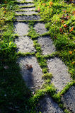 Big stones paved path in greens Stock Photography