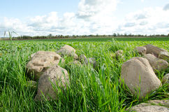 Big stones picked from agricultural fields Royalty Free Stock Photos
