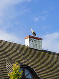 Big stork on the house roof Royalty Free Stock Photography