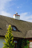 Big stork on the house roof Stock Photos