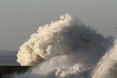 Big stormy wave Stock Image