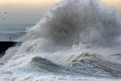 Big stormy waves Stock Photo