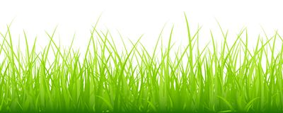 Big Meadow Horizontal Banner Green royalty free illustration