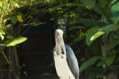 Big strange bird Royalty Free Stock Image
