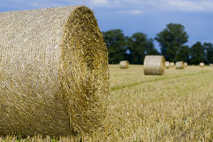 Big straw bale Stock Photography