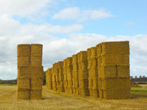 Big straw bales Stock Image