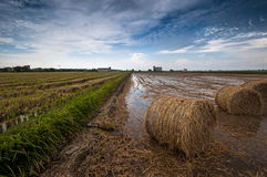 Big straw bales at paddy field,Malaysia. This is view of paddy field during harvest season,every year on month of may and december Royalty Free Stock Photography