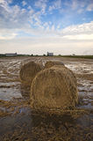Big straw bales at paddy field,Malaysia. This is view of paddy field during harvest season,every year on month of may and december Stock Photography