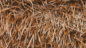 Big straw stack is covered with tent. Big straw stack is covered with a tent stock footage