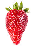 Big Strawberry Stock Photography