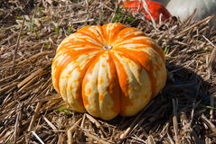 Big striped pumpkin on the hay Stock Photo