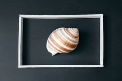 Cockleshell in frame. Royalty Free Stock Photos