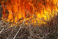 A big fire fire burns on a branch Royalty Free Stock Image